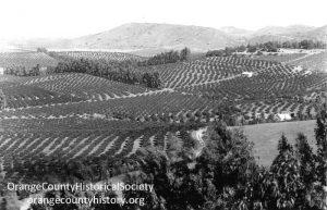 224 orange groves tustin